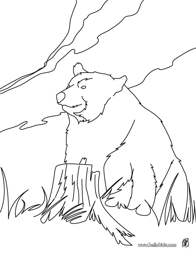 Brown Bear Line Drawing At Getdrawings Com Free For