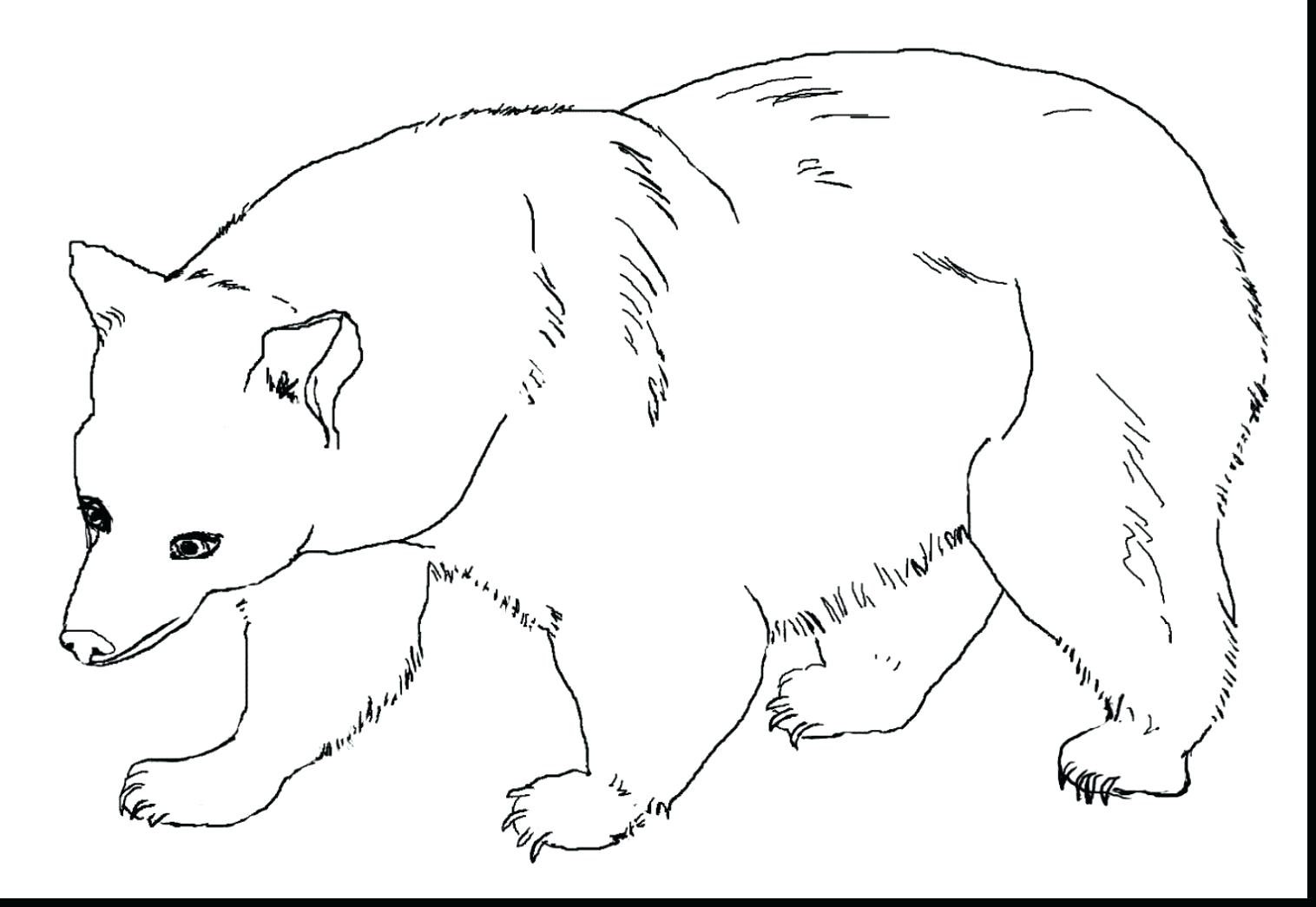 1516x1045 Polar Coloring Pages Bear Book Sheet Baby Pictures Cute