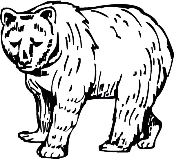 600x546 Sketch Of Brown Bear Coloring Pages Best Place To Color