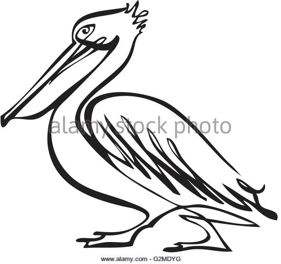 575x540 Pelican Silhouetted Stock Photos Amp Pelican Silhouetted Stock