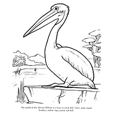 230x230 Top 10 Pelican Coloring Pages For Toddlers