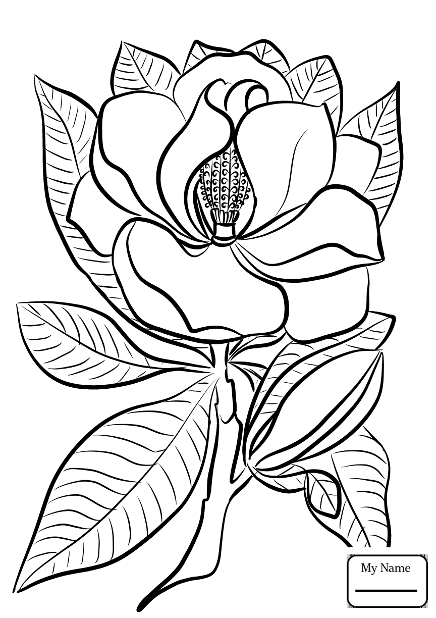864x1224 Coloring Pages Magnolia And Brown Pelican Louisiana State Flower