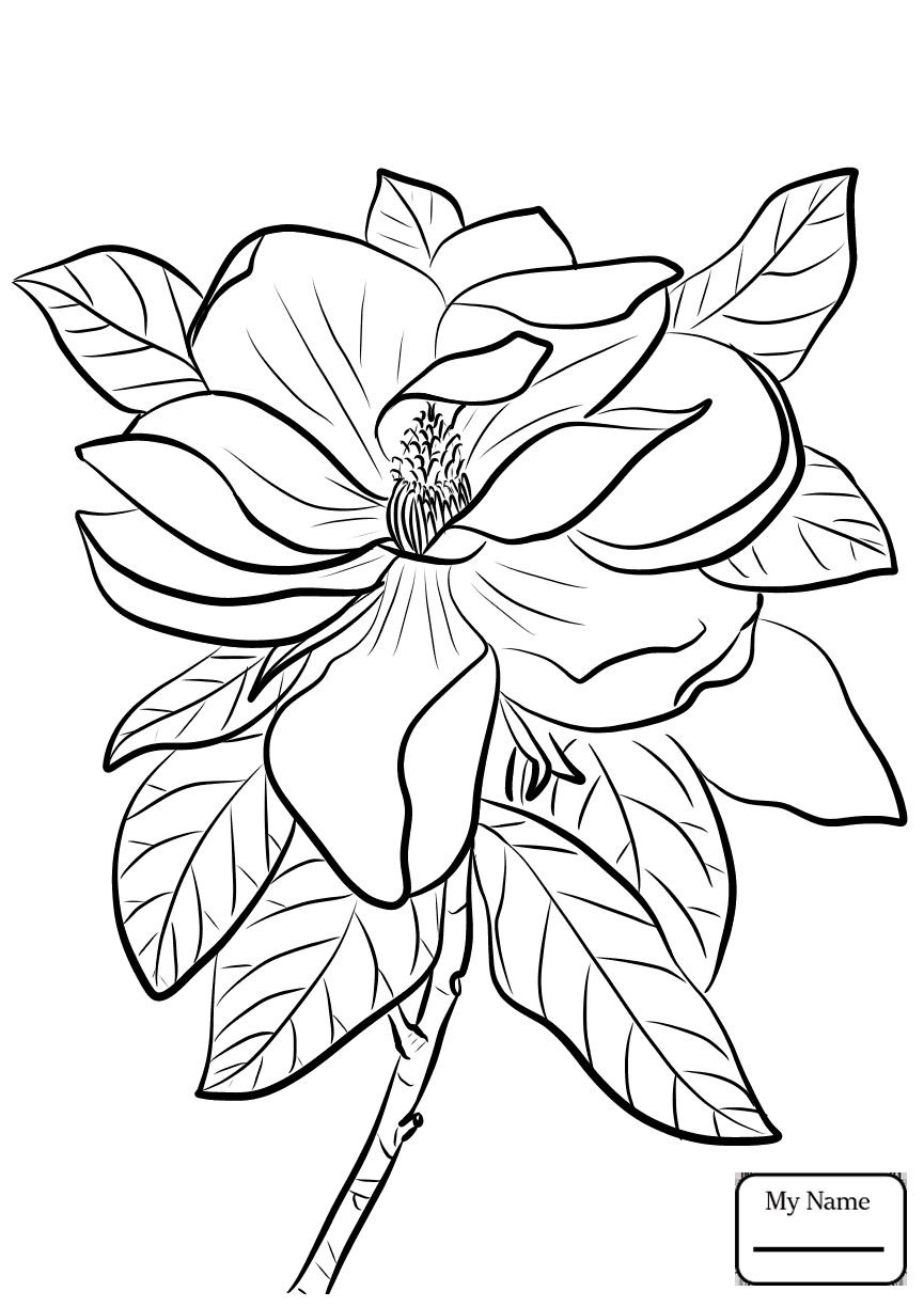 865x1224 Coloring Pages For Kids Magnolia And Brown Pelican Louisiana State