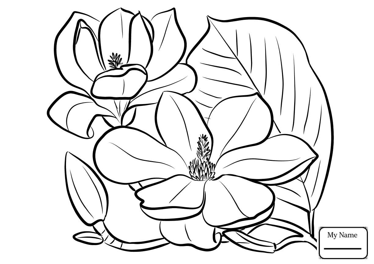 1224x865 Coloring Pages For Kids Flowers Magnolia And Brown Pelican