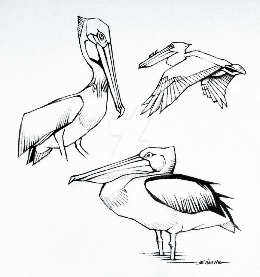 865x924 Pelican Sketches, Pencil On Bristol Paper, 2013. Tattoos