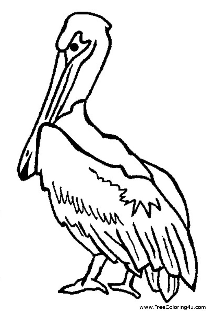 761x1080 Brown Pelican Coloring Pages
