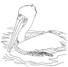 236x232 Brown Pelican Coloring Page Coloring Pages Plus Ariel
