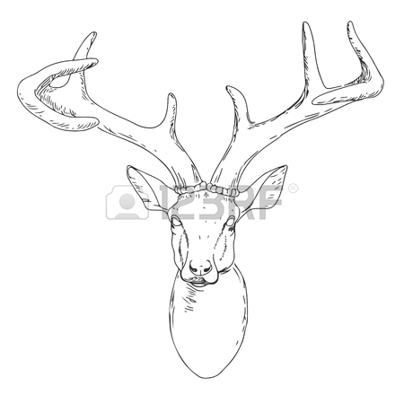 Buck Deer Drawing