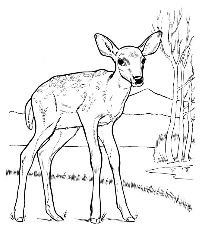 Buck Deer Drawing At Getdrawings Com Free For Personal Use Buck