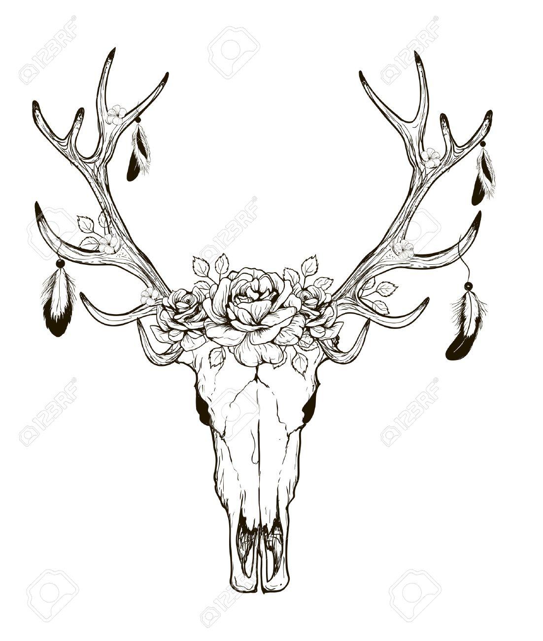 1102x1300 Deer Skull Black White Sketch, Illustrations Drawing Cow Skull