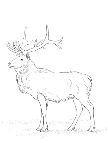 361x480 Deer Coloring Page Free Printable Coloring Pages