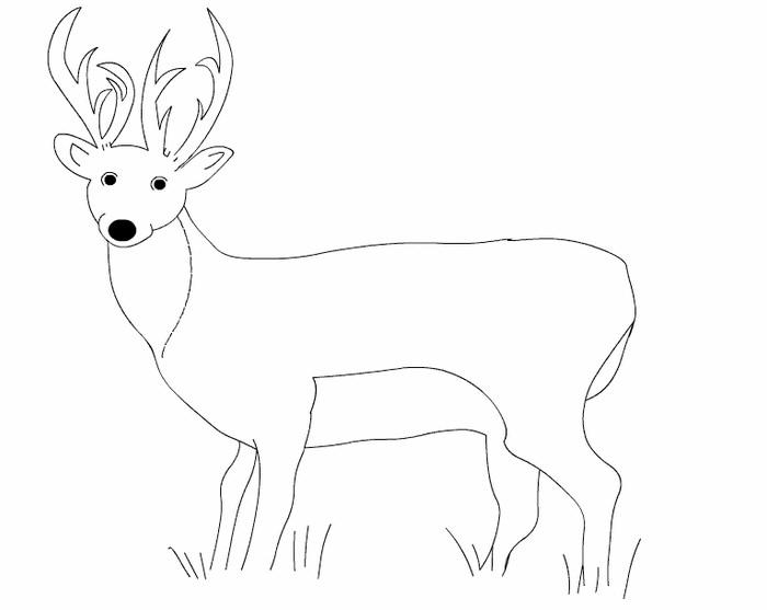 700x557 Deer Templates