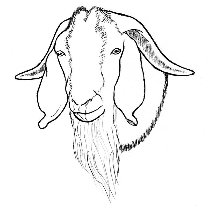 807x800 Goat Drawings