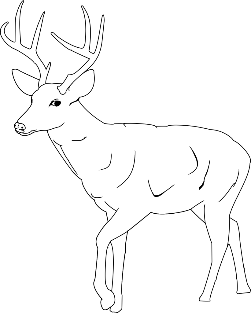 821x1024 Realistic Whitetail Deer Coloring Pages Printable For Amusing Draw