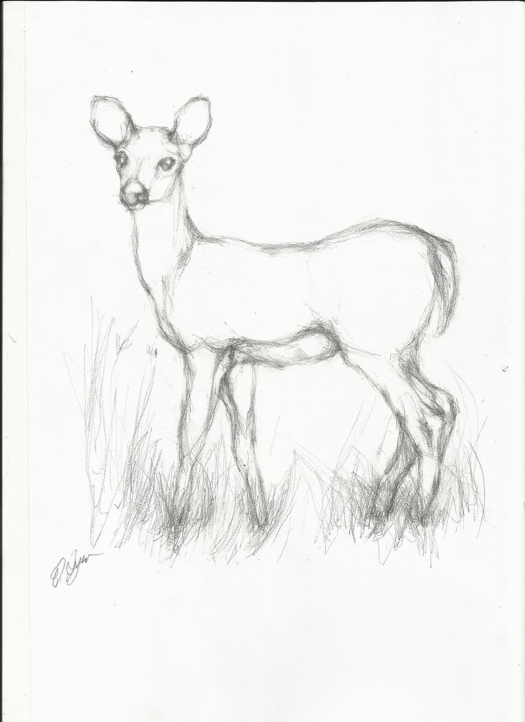 1700x2338 Simple Deer Pencil Sketch