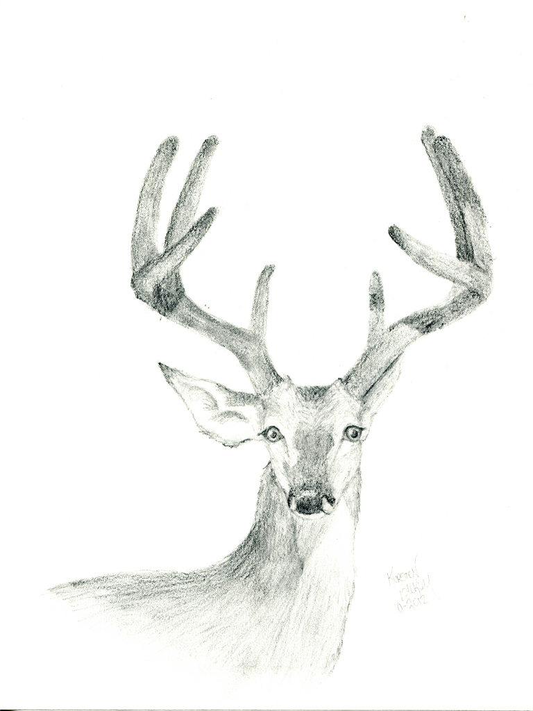 768x1024 Whitetail Buck In Velvet By Thecampolina