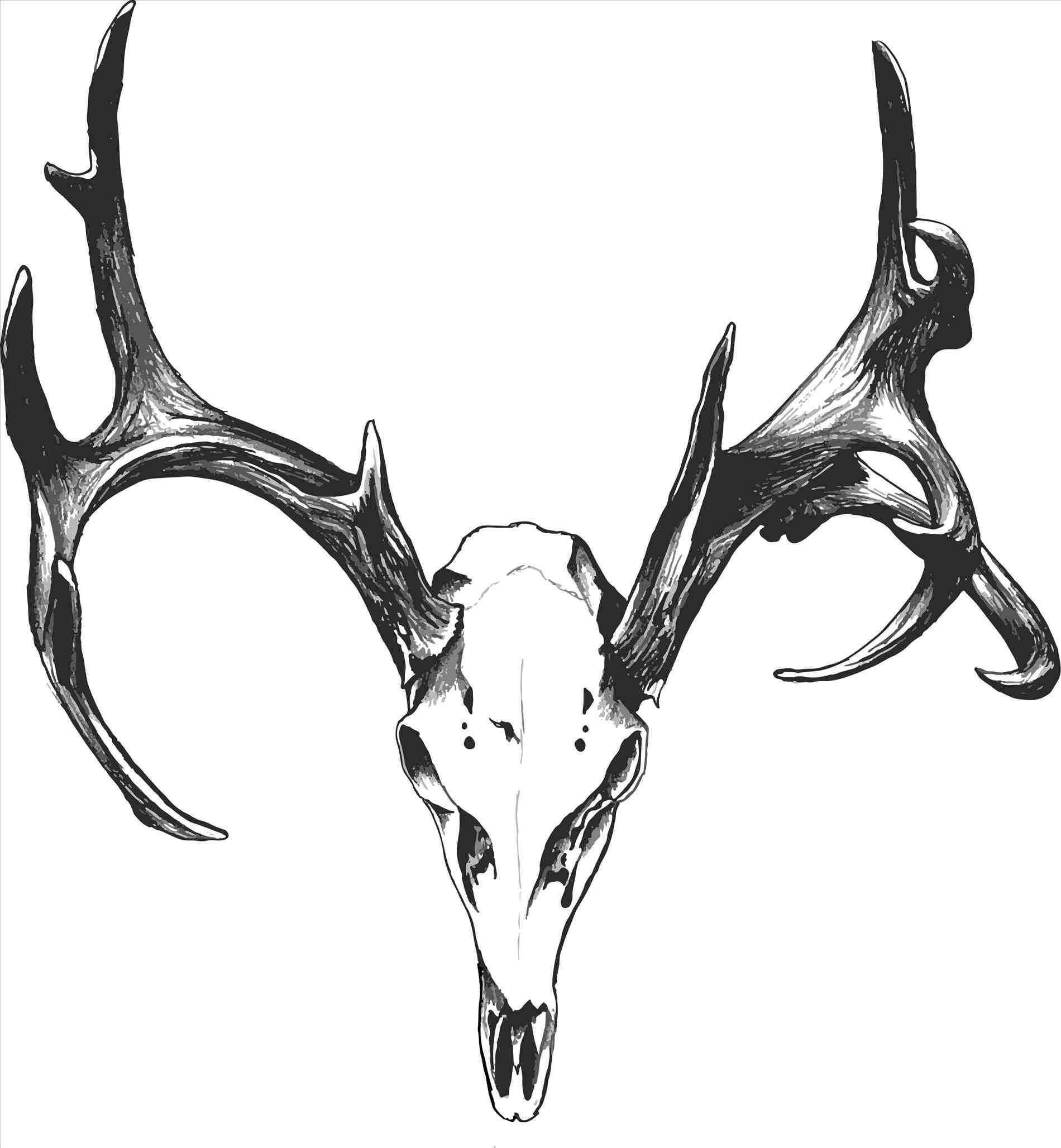 1900x2056 Deer Buck Drawings Black And White