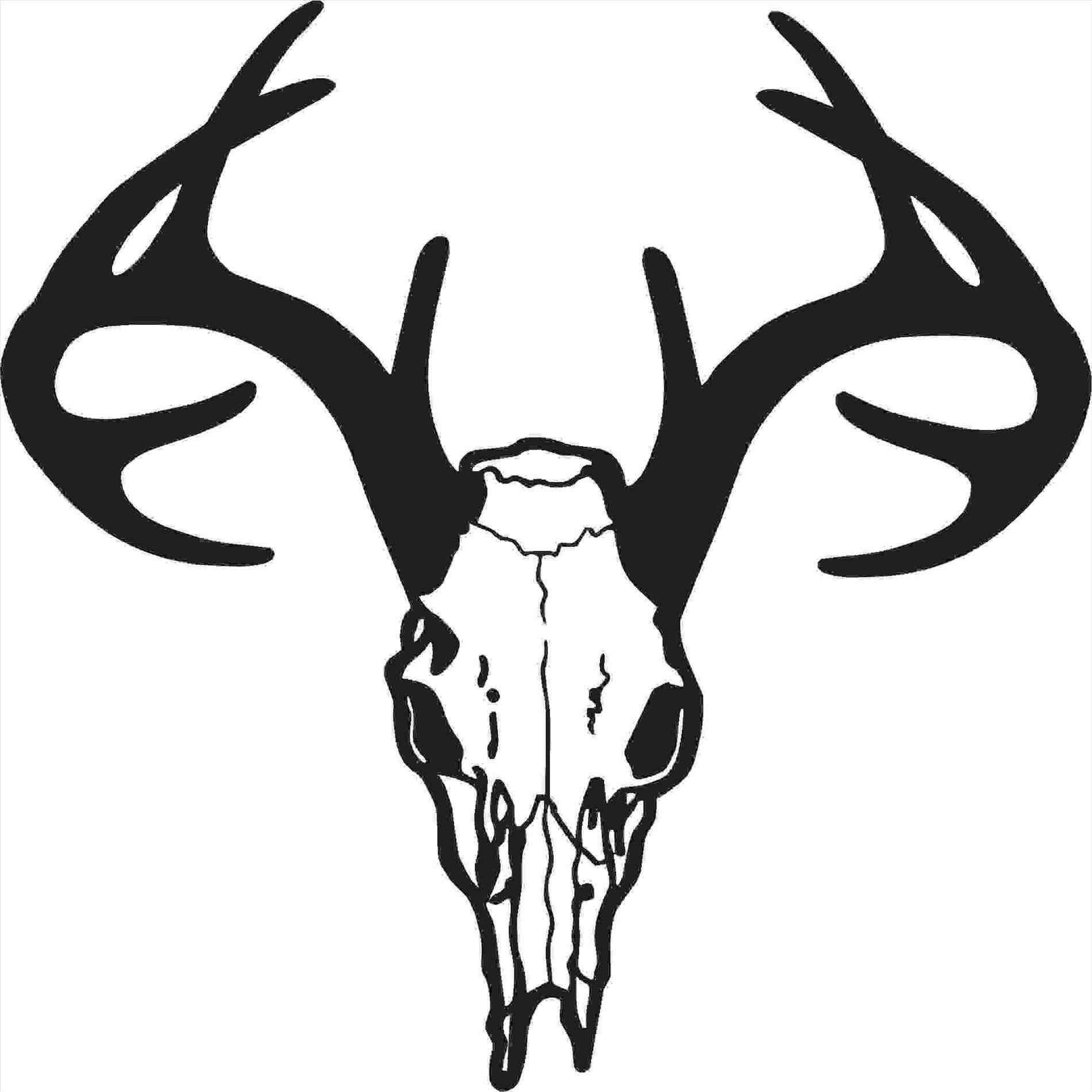 1900x1900 Mule Deer Buck Drawings