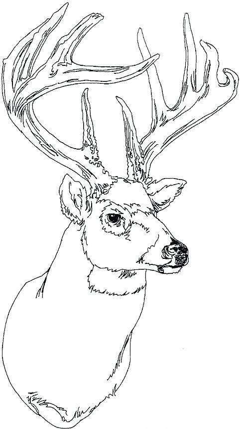 500x860 Deer Coloring Pages Coloring Page Deer Deer Antler Coloring Pages