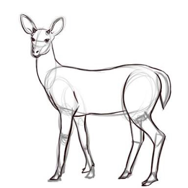 Buck Line Drawing At Getdrawings Com
