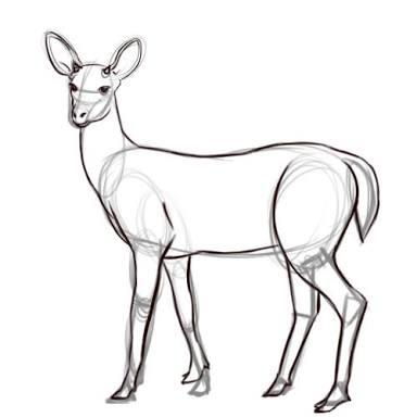 384x384 Couple Deer Tattoo Doe Outline Tattoo Ideas Deer