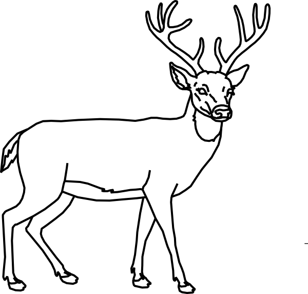 600x572 Deer Outline Clipart Black And White