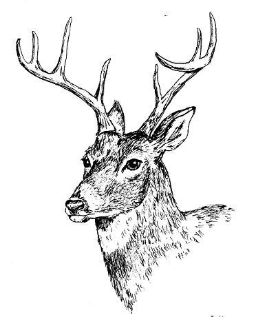 372x460 Pen Drawing Animals