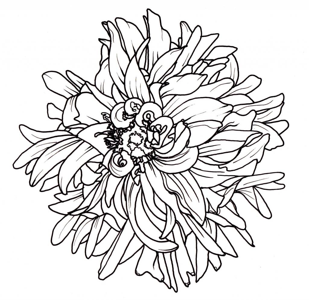 1024x995 Flower Bucket Drawing Flower Bucket Drawing