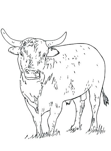 Bucking bull drawing at free for for Bucking bull coloring pages