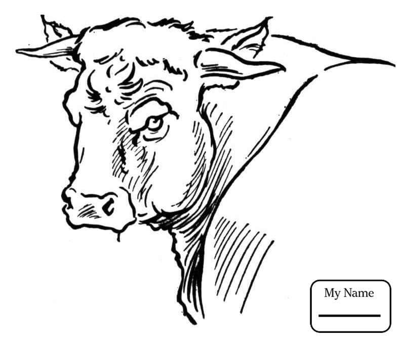 788x672 Bulls Bucking Bull Mammals Coloring Pages For Kids