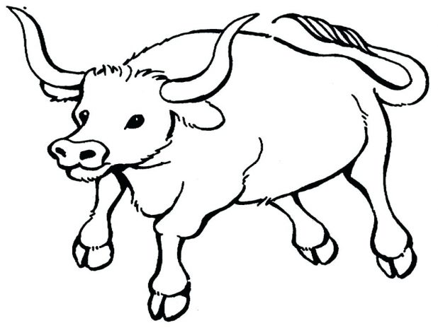 618x464 Bucking Bull Coloring Pages Images View Larger Bulldog For Adults