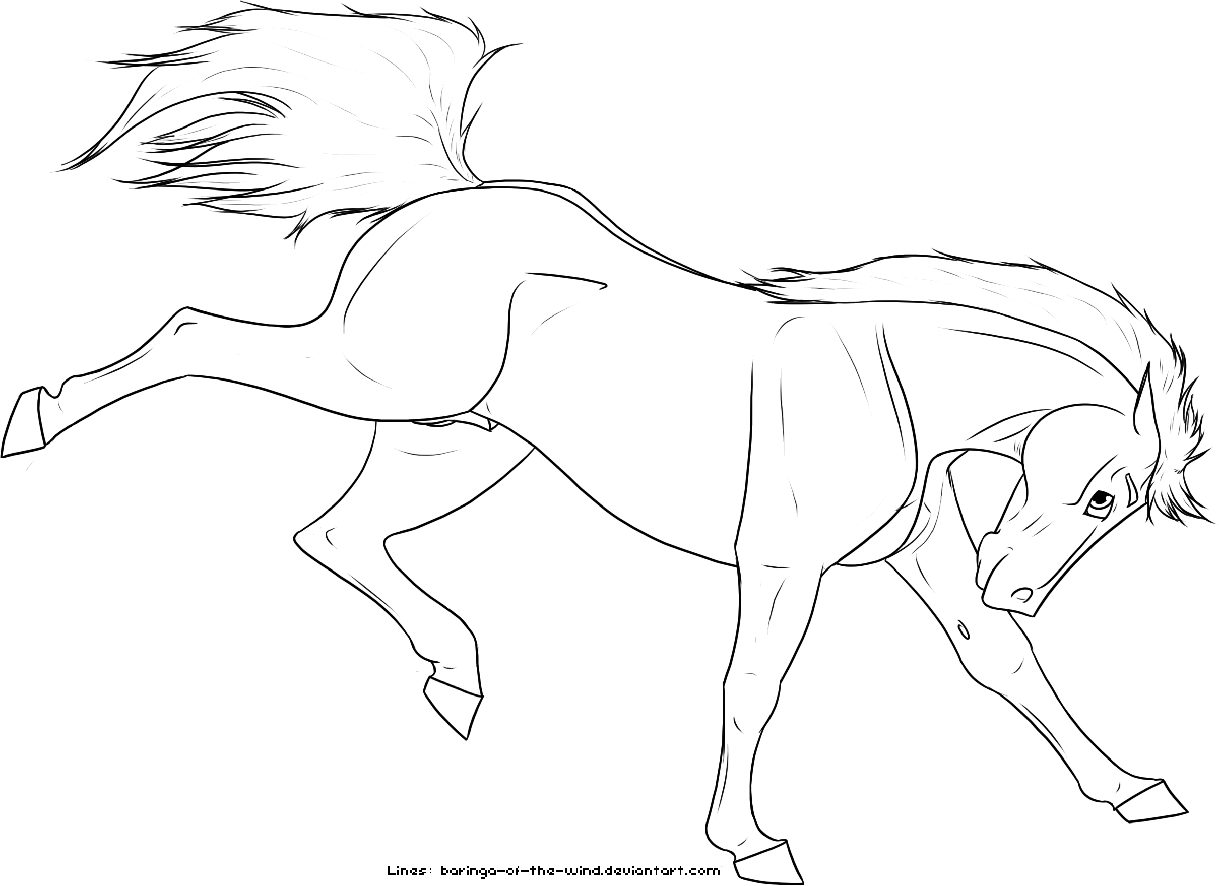 Bucking Horse Drawing