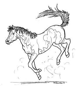 260x300 Bucking Horse Drawings Fine Art America