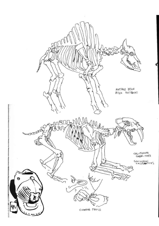 862x1228 La Brea Skeletons 1.jpg