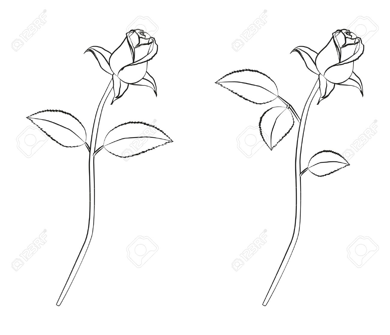 1300x1119 Drawing A Rose Bud Detailed Linework Of A Rose Royalty Free