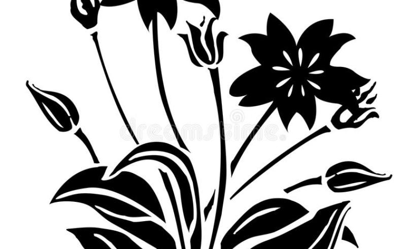 800x491 Drawing Of A Flower Bud Gardening Flower And Vegetables