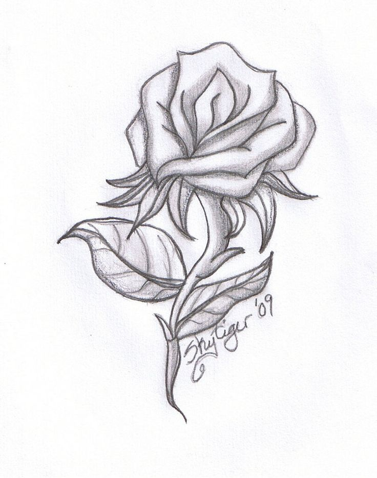 736x933 Drawn Rose How To Draw A Rose To Draw A Bud For Drawn
