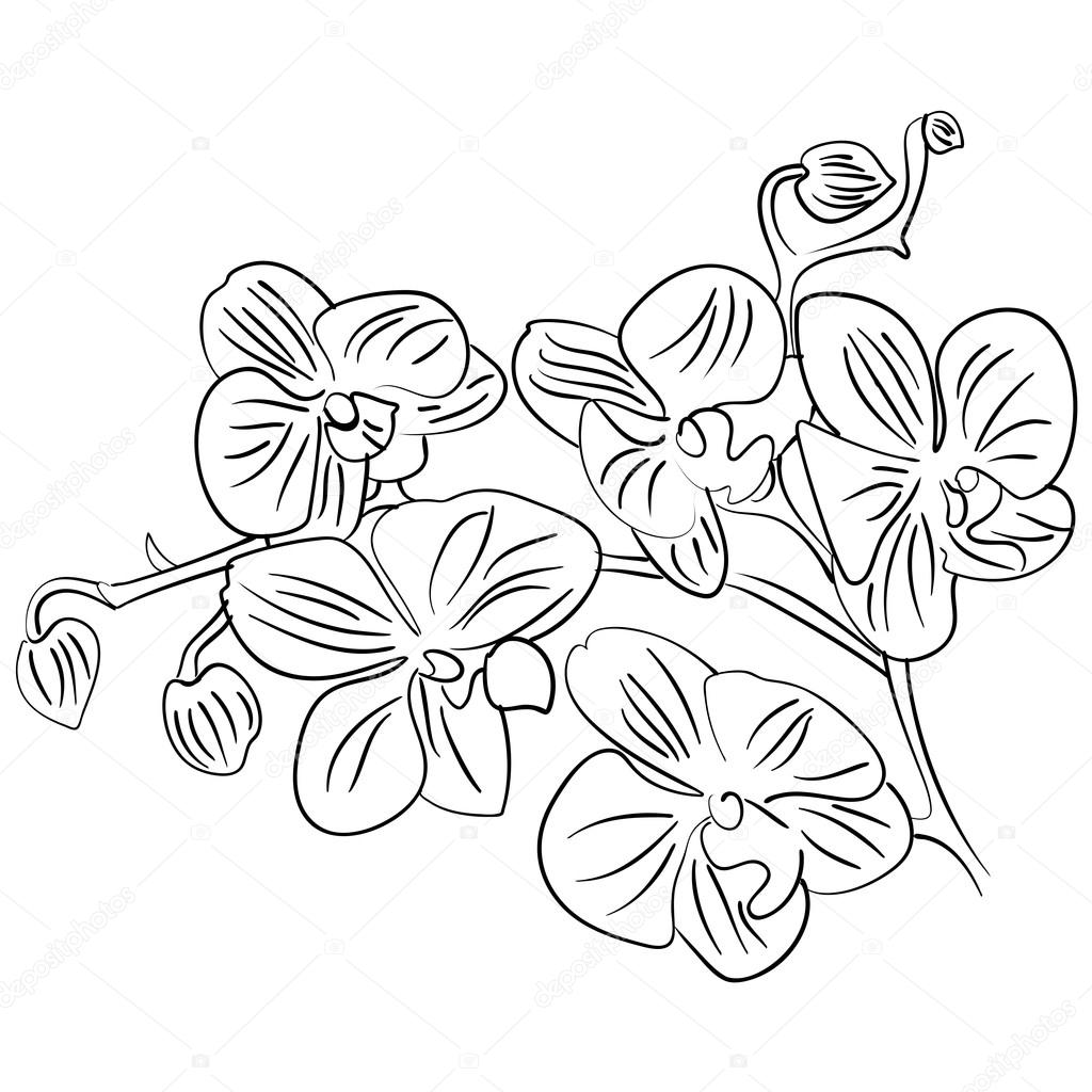 1024x1024 Flowers With Bud Outline Sketch Vector Stock Vector Tiverets