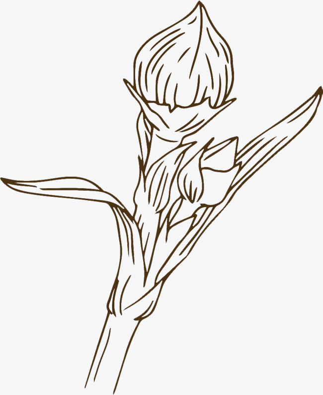 650x795 Hand Drawing Bud Bud Illustrations, Hand, Line Drawing, Hand Drawn