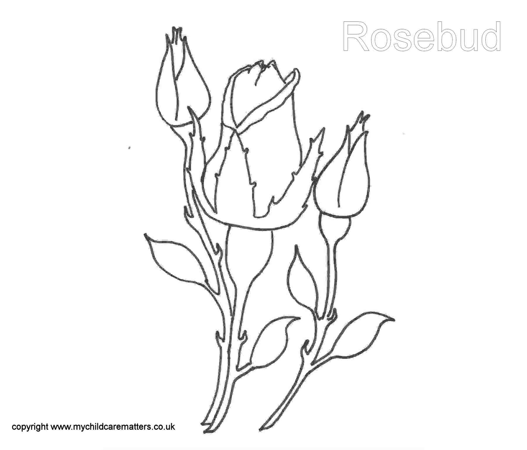 1798x1537 Rose Bud Rock Art Rose Buds, Rock Art And Project