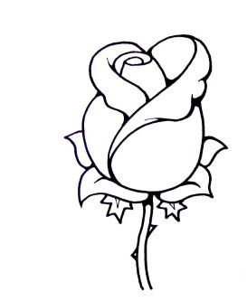 273x333 Simple Rose Bud Drawing