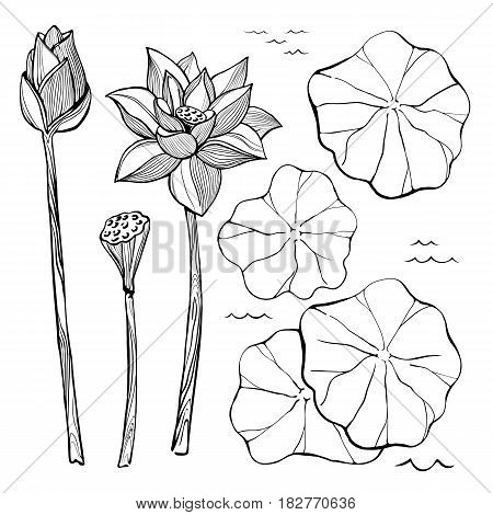 450x470 Vector Sketch Set Flowers Leaves Vector Amp Photo Bigstock