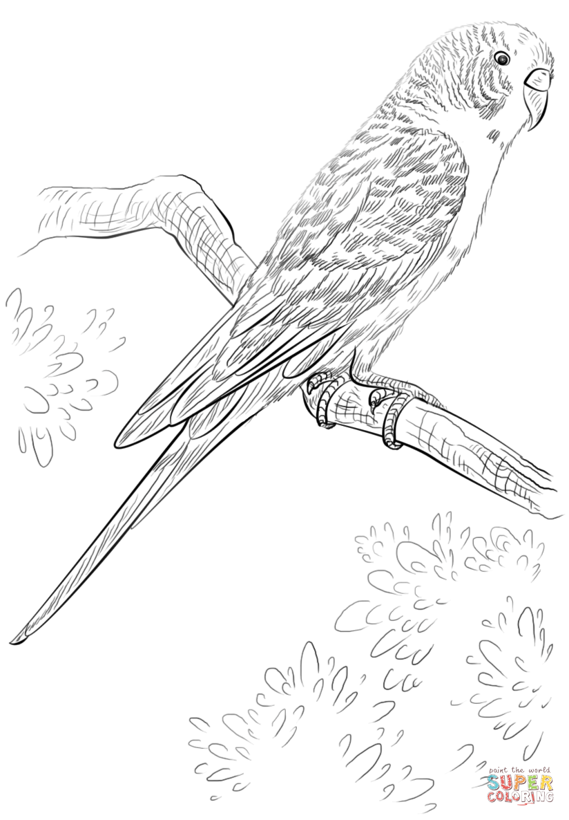 824x1186 Budgie Parrot Coloring Page Free Printable Coloring Pages