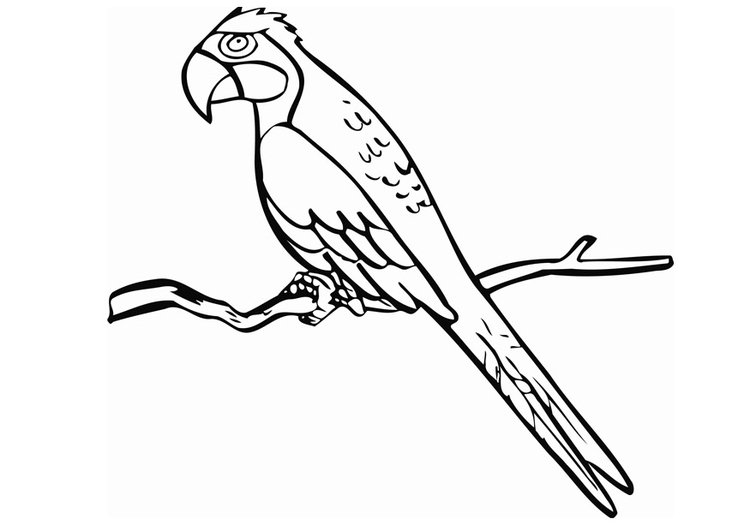 750x531 Coloring Page Parrot