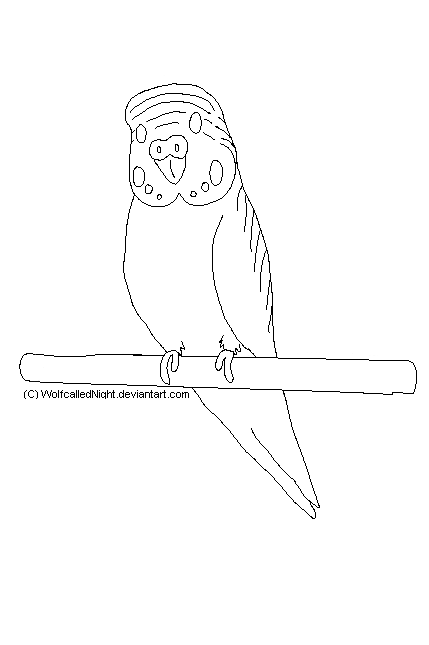 429x645 Free Budgie Lineart By Wolfcallednight