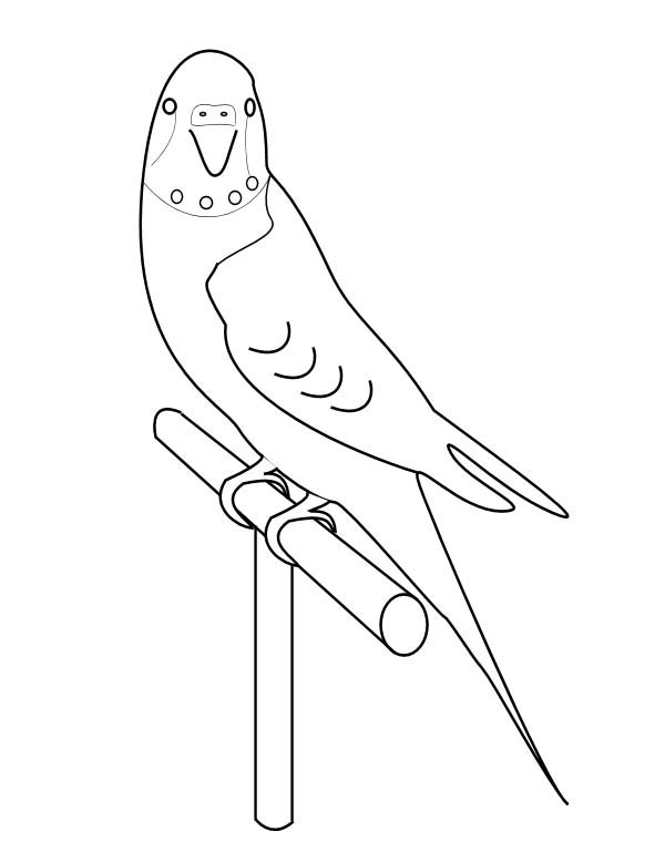 600x760 How To Draw Parakeet Coloring Page Coloring Sun