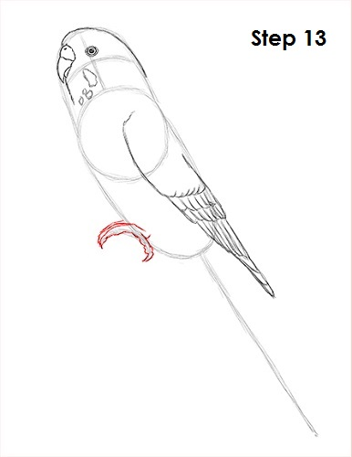 386x500 How To Draw A Budgie (Parakeet)