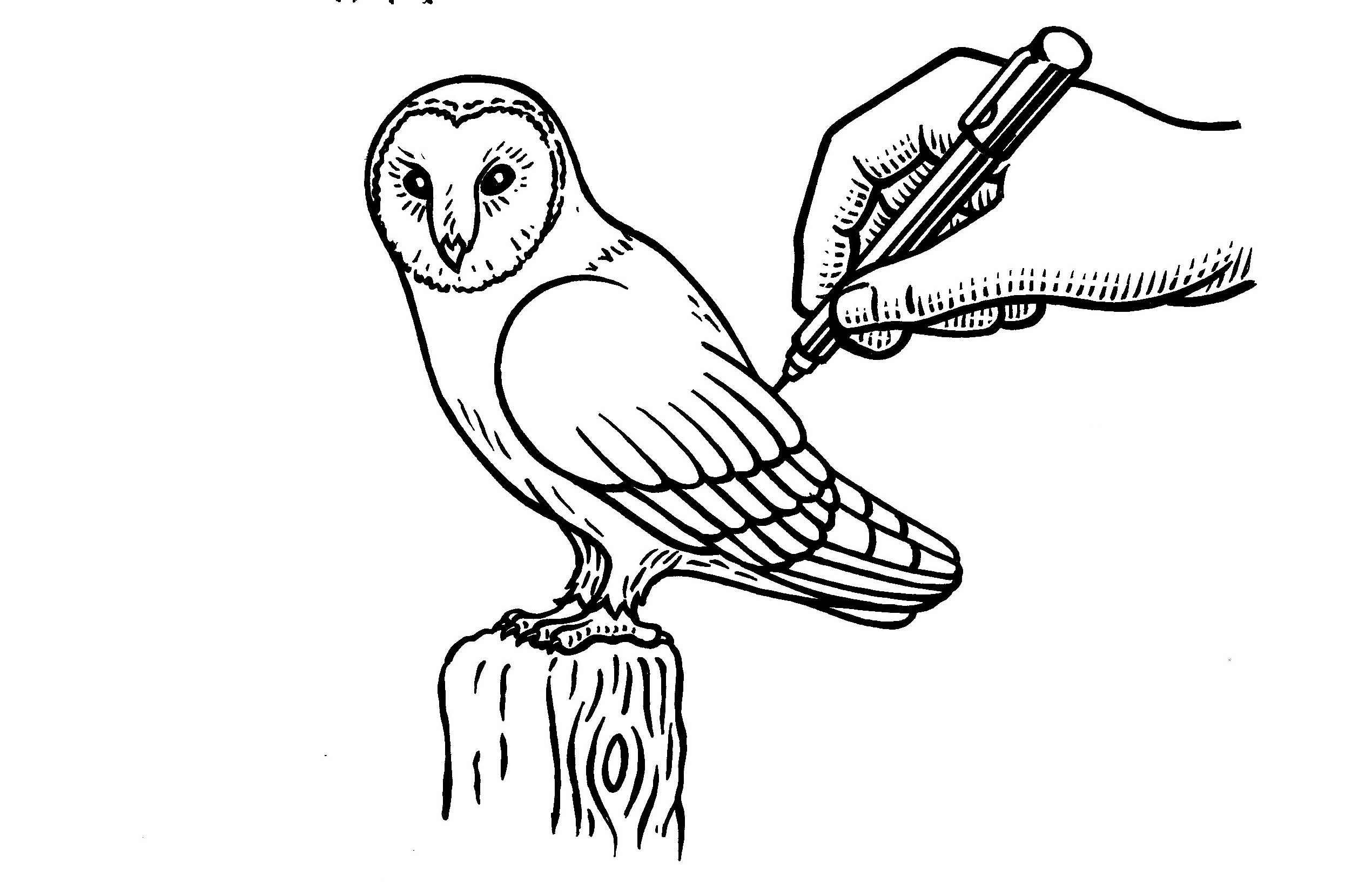 2540x1632 How To Draw A Barn Owl