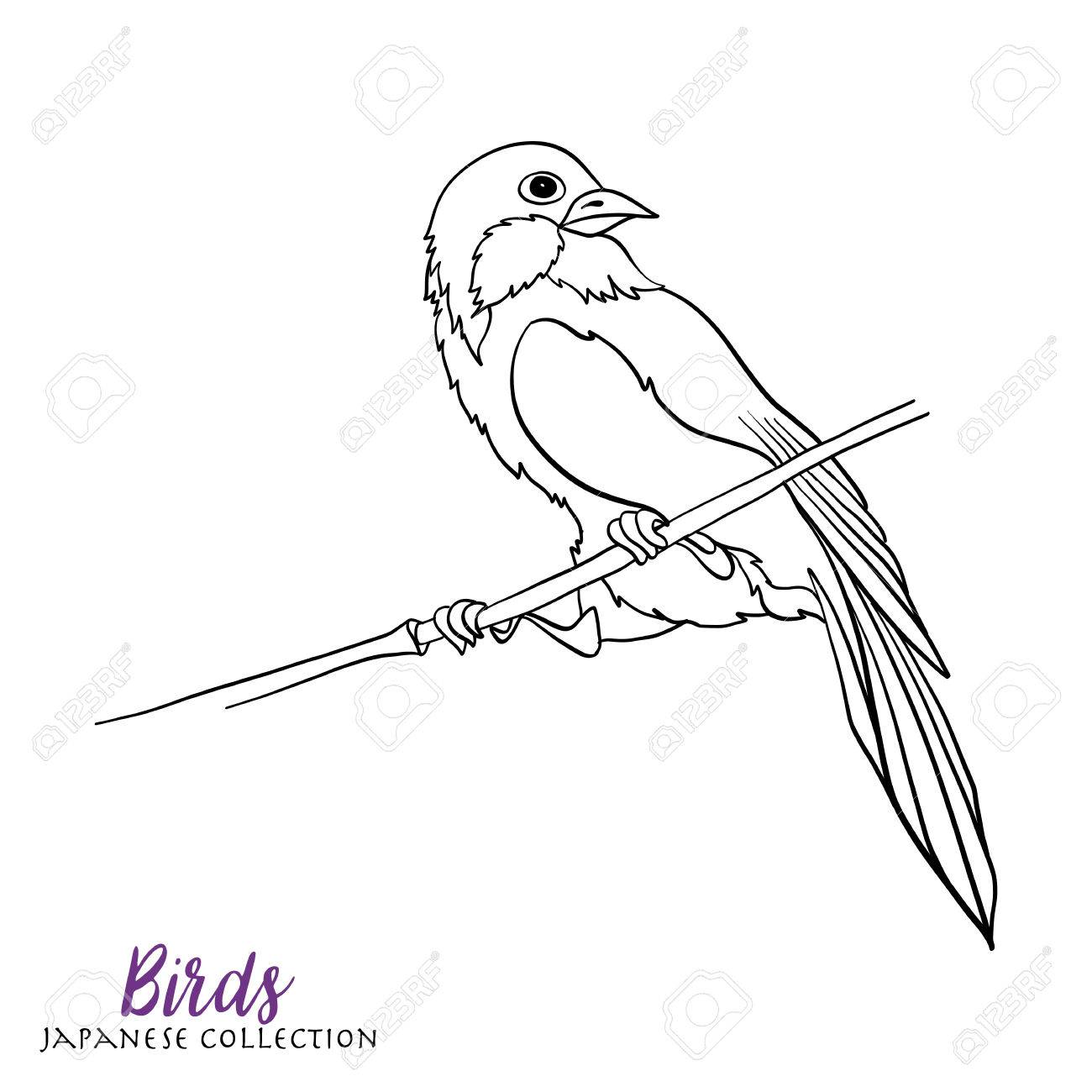 1300x1300 Japanese Birds. Stock Line Vector Illustration. Coloring Book