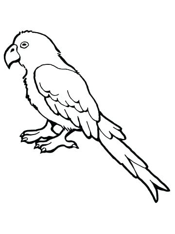 360x480 Parakeet Coloring Pages Budgerigar Animal Coloring Pages Cheerful